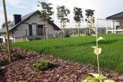 ogród-malawa-14