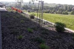 ogród-malawa-8