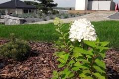 ogród-malawa-9