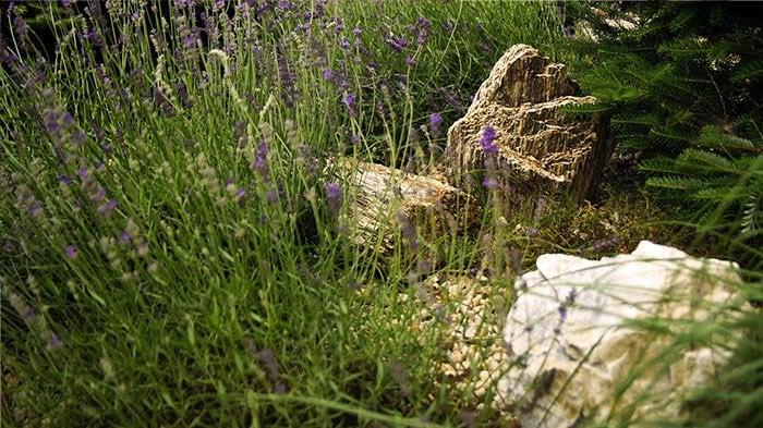 Postaw na ogród – jak sprawić, aby wzbudzał zachwyt wśród Twoich gości?