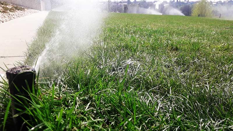 Zakładanie trawnika, kiedy się za to zabrać?