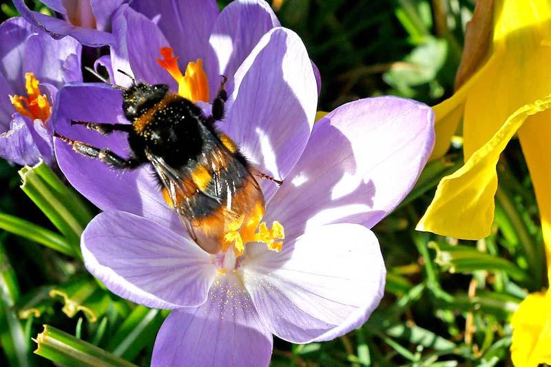 Ochrona roślin chemicznymi środkami