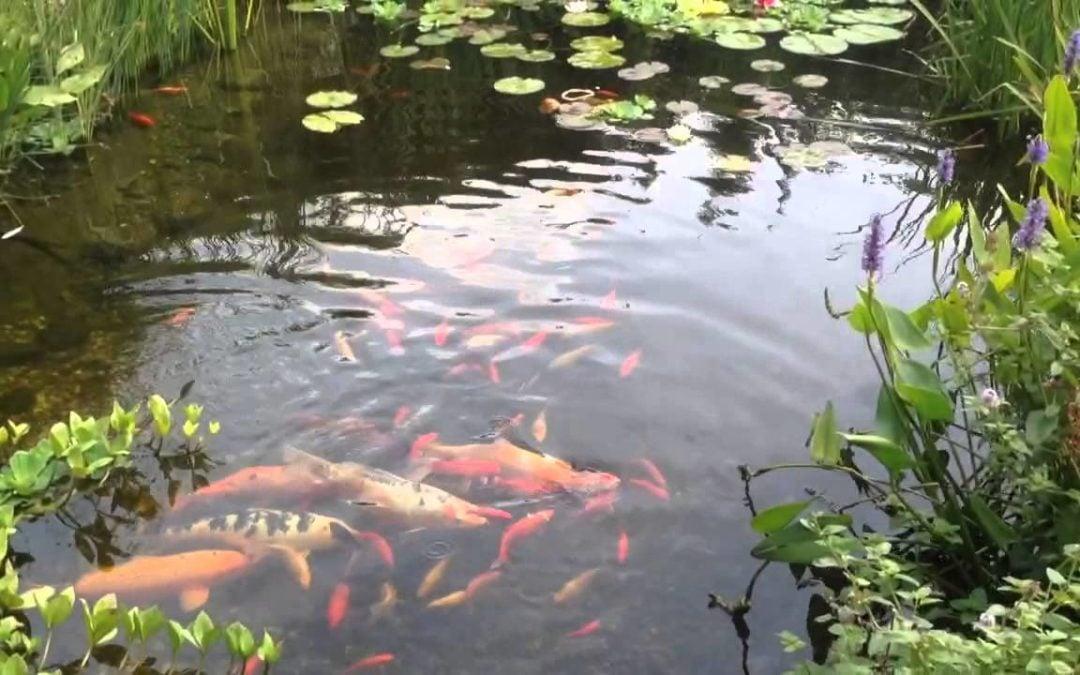 Oczko wodne i ogród po zimie