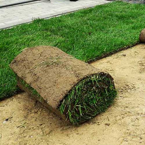 zakładanie trawników Rzeszów