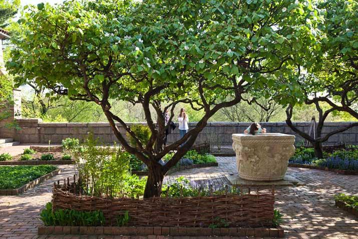 Drzewa do ogrodu – dobór gatunków