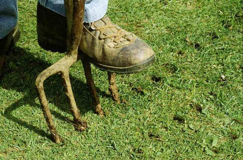 Aeracja trawnika – jak zrobić ją poprawnie?