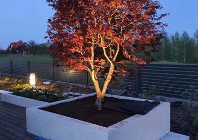 sadzenie drzewa na tarasie