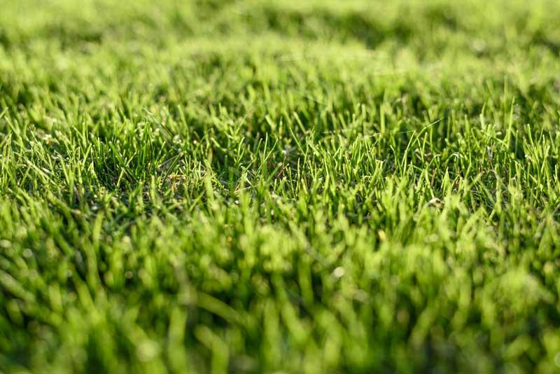 Wiosenna pielęgnacja trawników